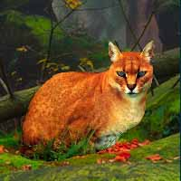 Big African Golden Cat Escape