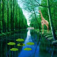 Giraffe Lake Forest Escape